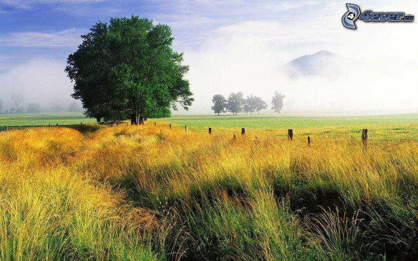 samotne drzewa, żółta trawa, łąka, mgła, wzgórze