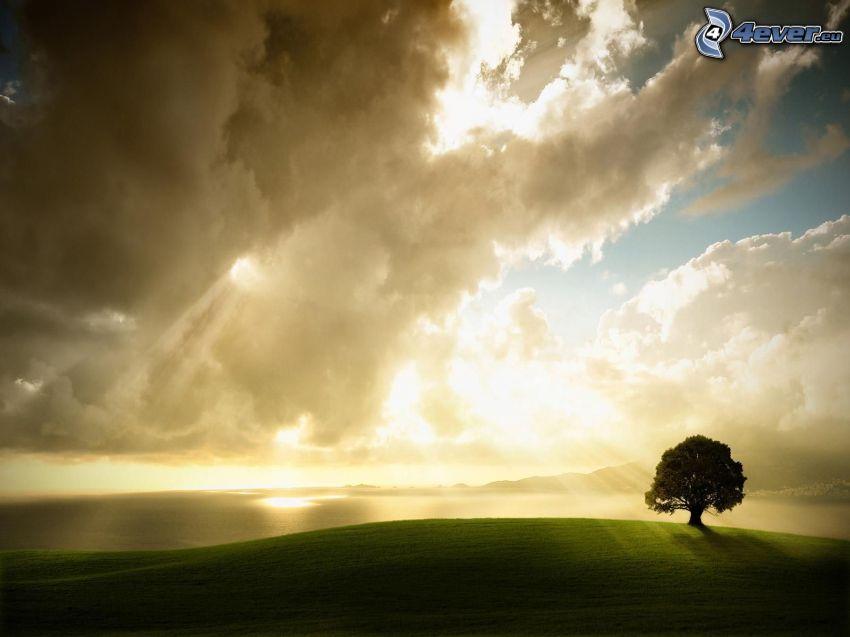samotne drzewo, chmury, łąka, promienie słoneczne