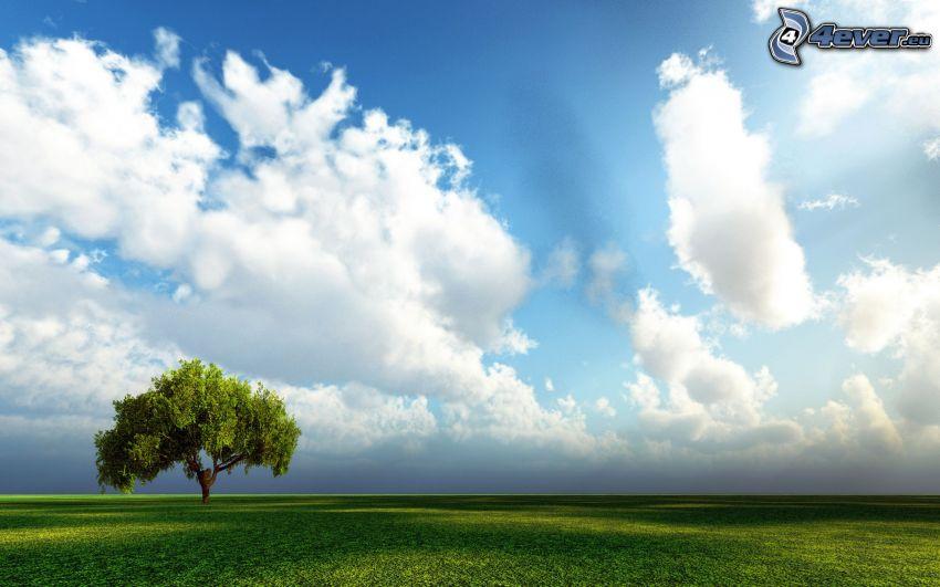 samotne drzewo, chmury, łąka