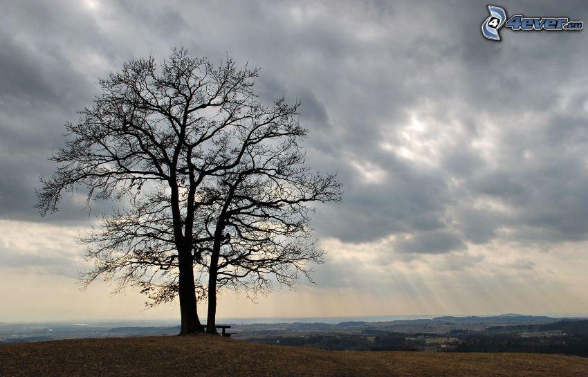 samotne drzewo, ciemne chmury, promienie słoneczne