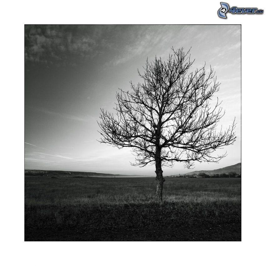 samotne drzewo, drzewo bez liści, łąka, czarno-białe