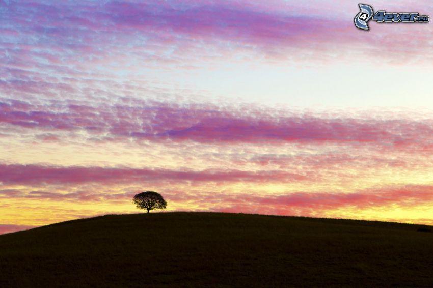 samotne drzewo, horyzont, niebo o zmroku