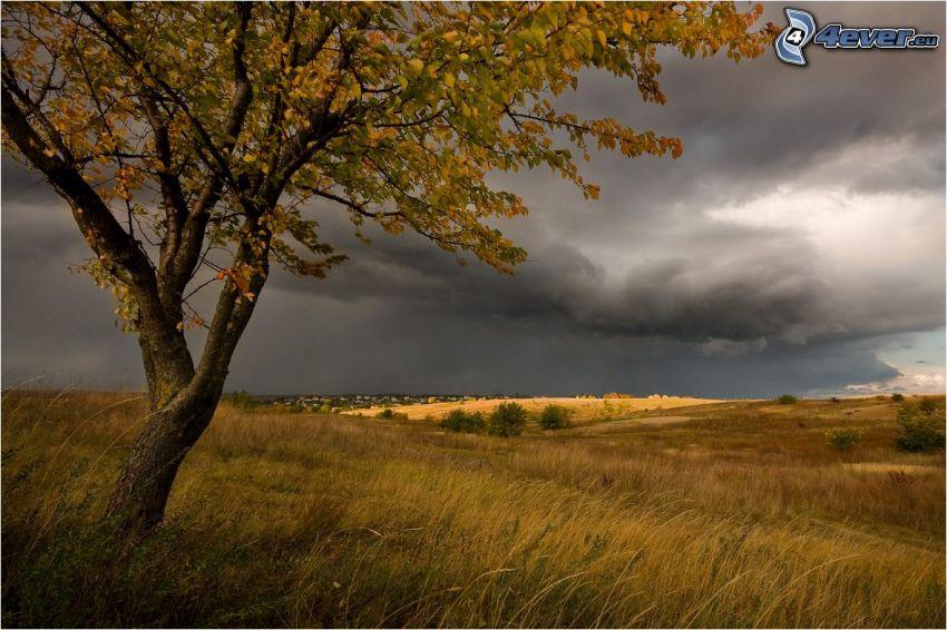 samotne drzewo, jesienne drzewo, łąka, chmury burzowe