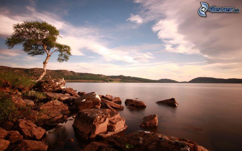 samotne drzewo, jezioro, pasmo górskie, kamienie