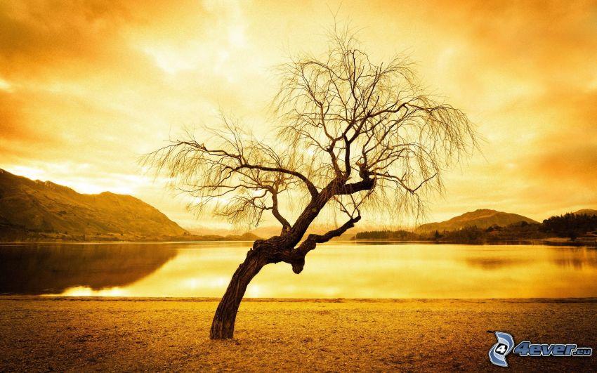samotne drzewo, jezioro, żółte niebo