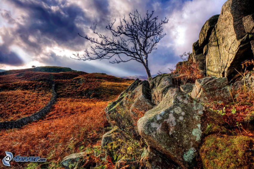 samotne drzewo, kamienie, łąka, chmury