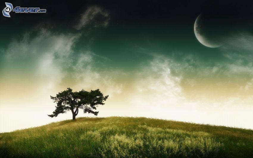 samotne drzewo, księżyc, łąka