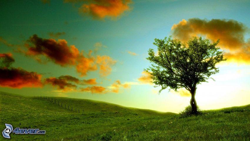 samotne drzewo, łąka, chmury