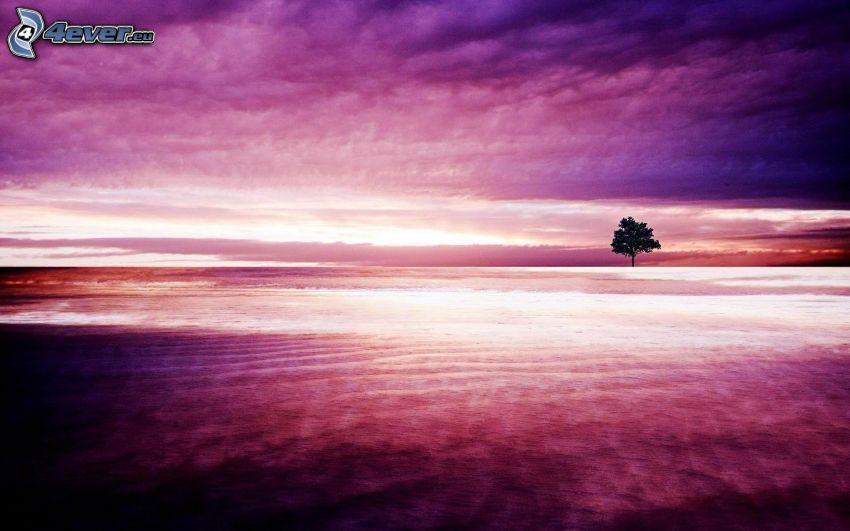 samotne drzewo, łąka, fioletowe niebo