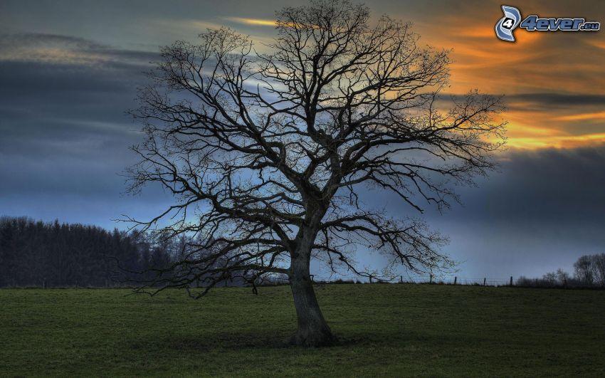 samotne drzewo, łąka, niebo o zmroku