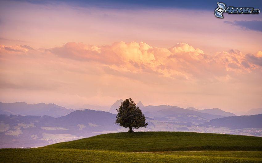 samotne drzewo, łąka, pasmo górskie
