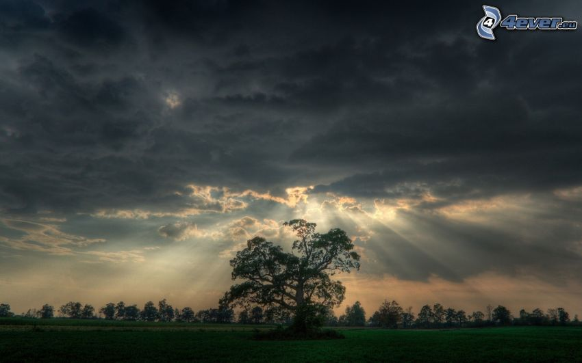 samotne drzewo, promienie słoneczne, chmury