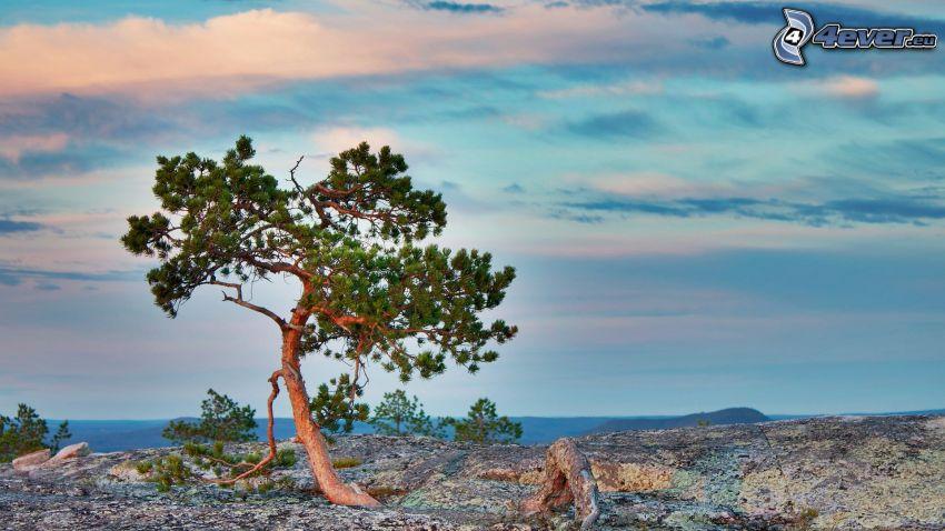 samotne drzewo, skały, niebo