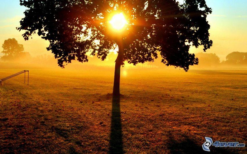 samotne drzewo, słońce