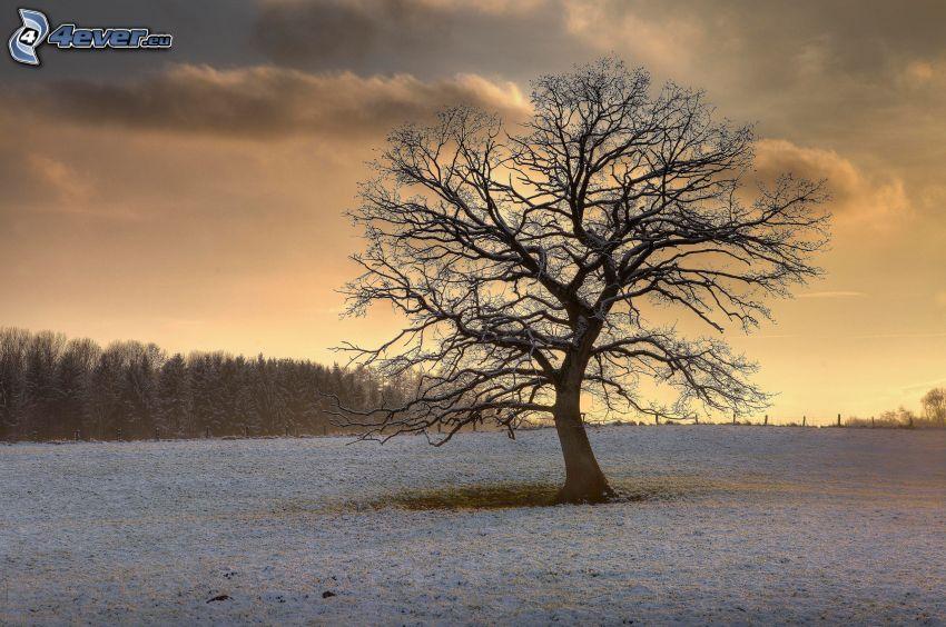 samotne drzewo, śnieg