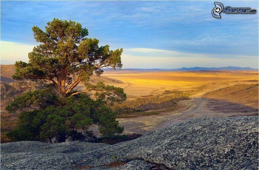 samotne drzewo, widok na krajobraz