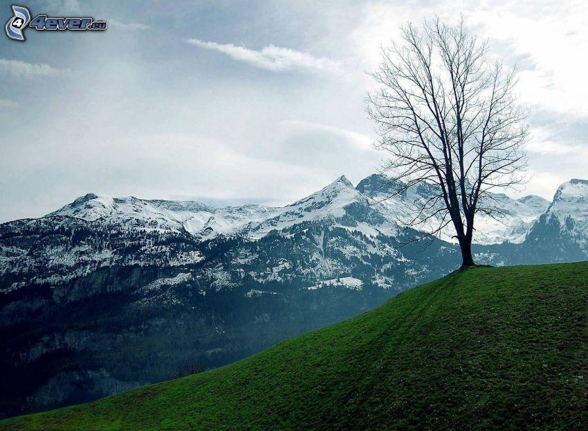 samotne drzewo, zaśnieżone pasmo górskie, niebo