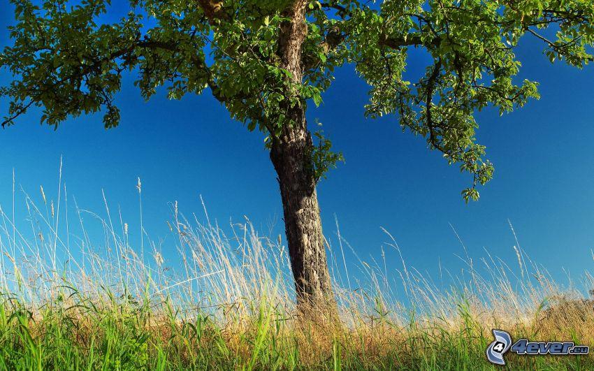 samotne drzewo, źdźbła trawy