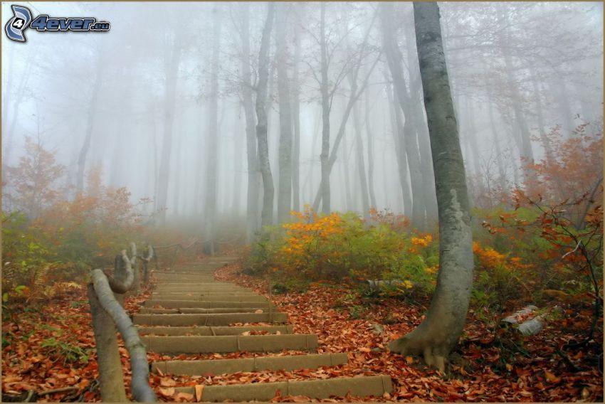 schody, chodnik przez las, mgła, opadnięte liście