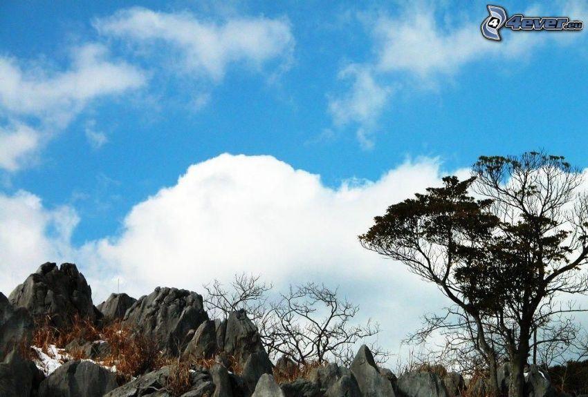 skały, drzewo, śnieg, chmura