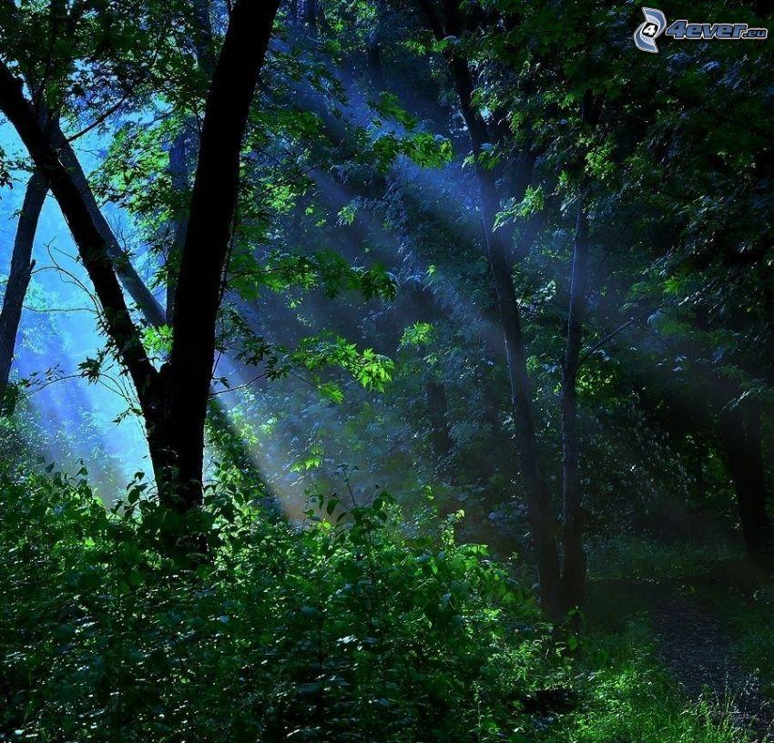słoneczne promienie, w lesie, drzewa liściaste