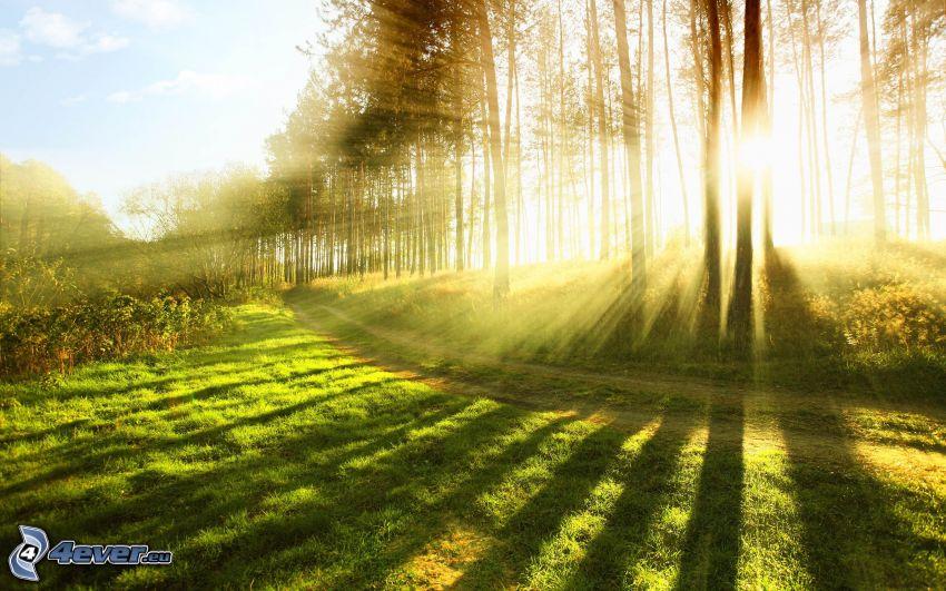słoneczne promienie, w lesie, polna droga, łąka