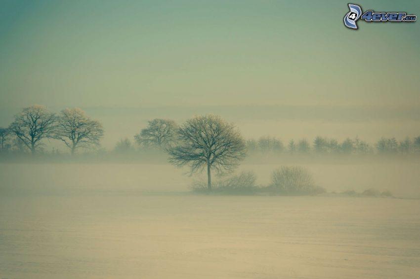 śnieżny krajobraz, drzewa