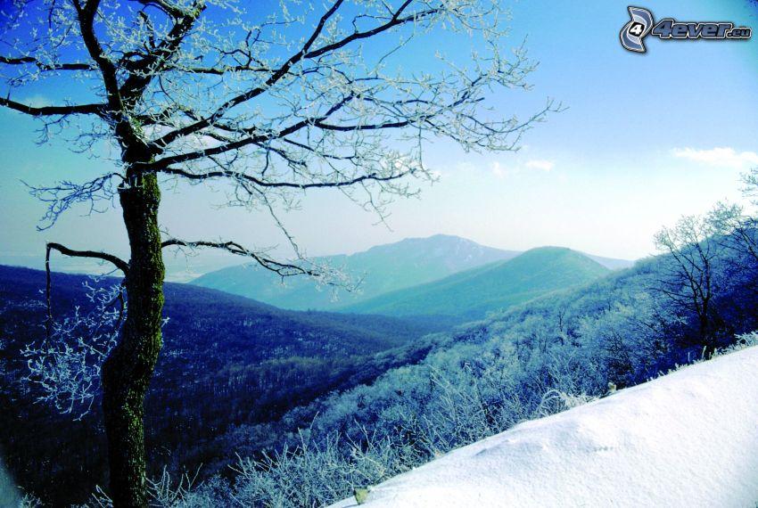 śnieżny krajobraz, drzewo