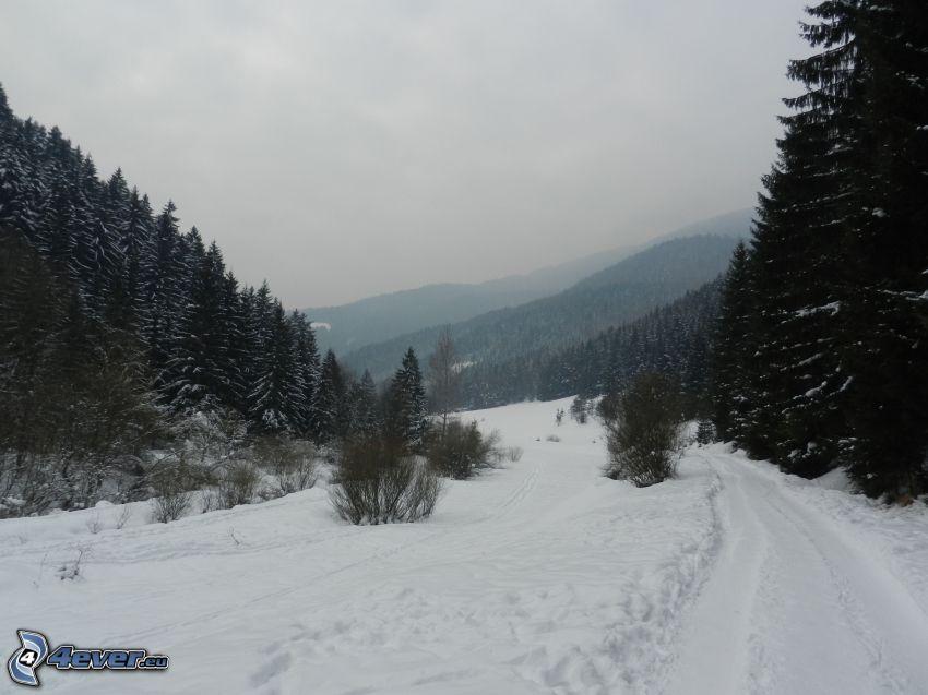 śnieżny krajobraz, polna droga, las iglasty, wzgórza