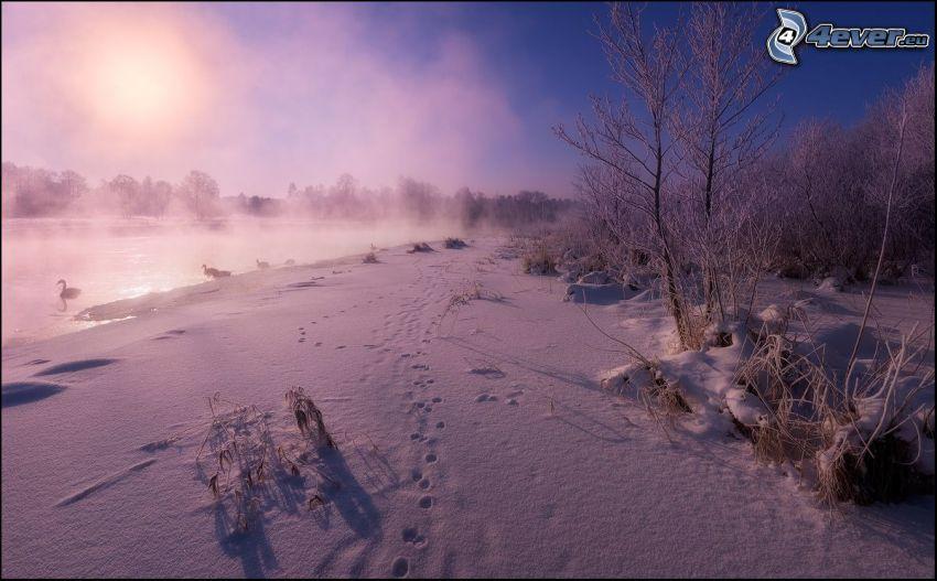 śnieżny krajobraz, ślady w śniegu, jezioro, łabędzie