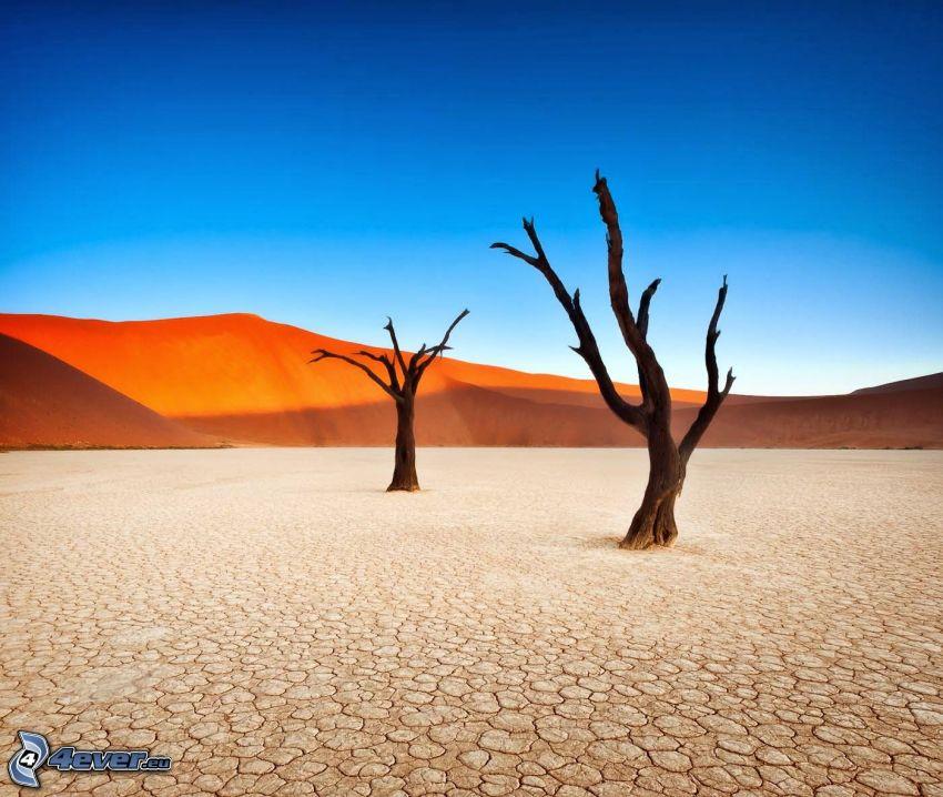 Sossusvlei, piaskowa wydma, suche drzewa, pęknięcia
