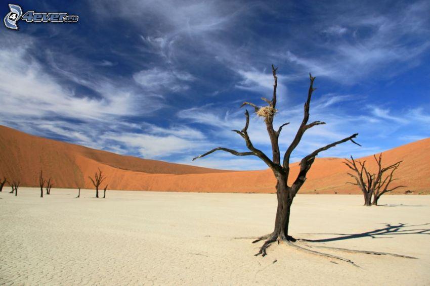 Sossusvlei, piaskowa wydma, suche drzewa