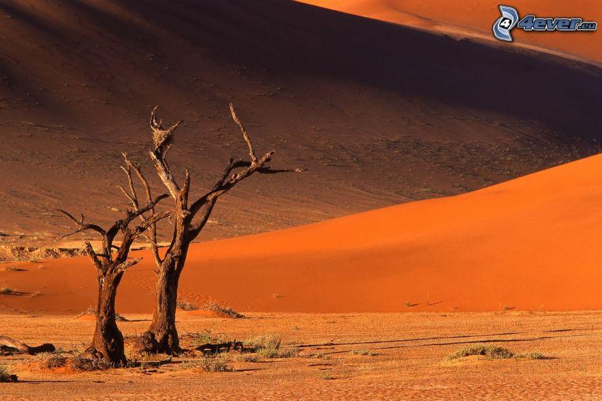 Sossusvlei, suche drzewa, piaskowa wydma