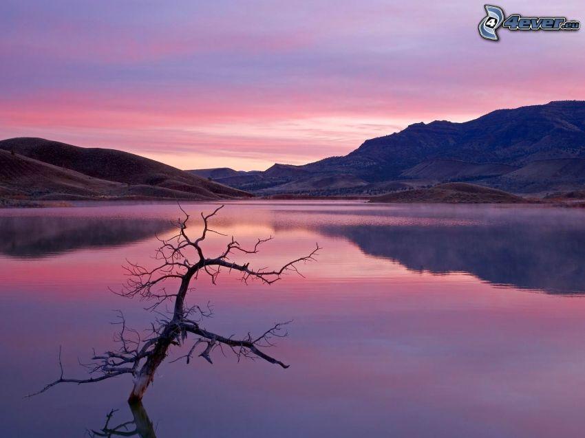 spokojne jezioro wieczorem, wyschnięte drzewo, wzgórza