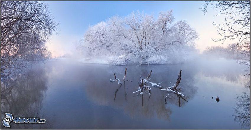 spokojne jezioro zimą, zaśnieżone drzewo