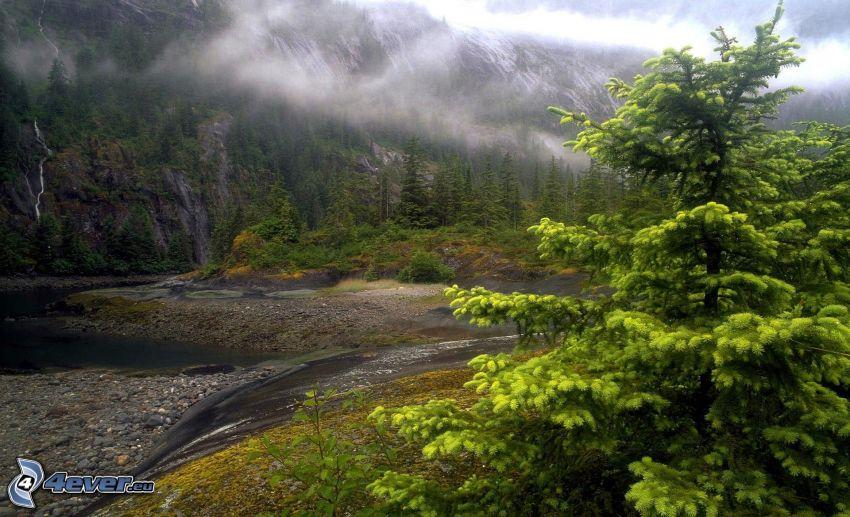 strumyk, drzewo, mgła, góra skalista