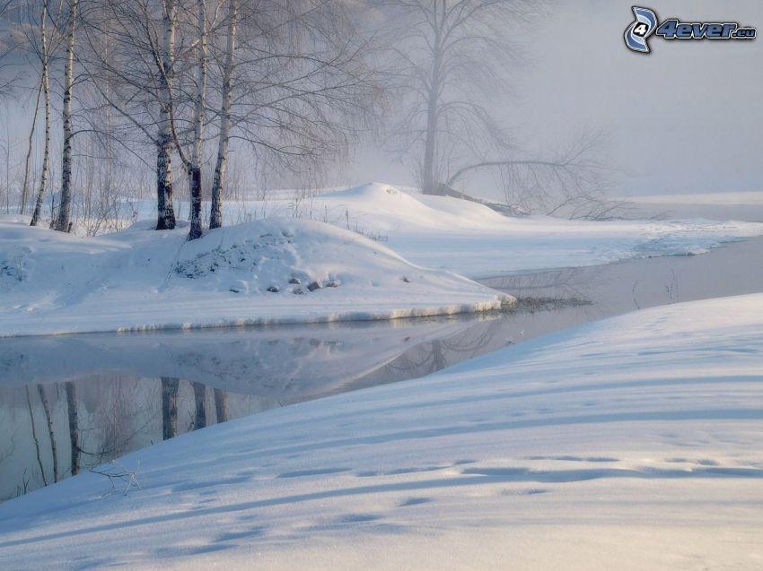strumyk, śnieg, brzozy
