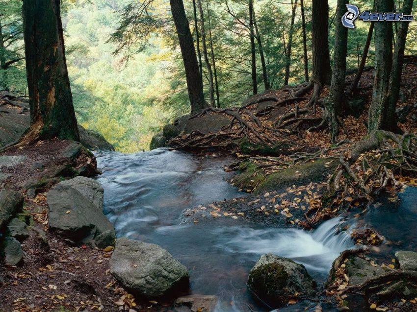 strumyk w lesie, drzewa, jesienne liście
