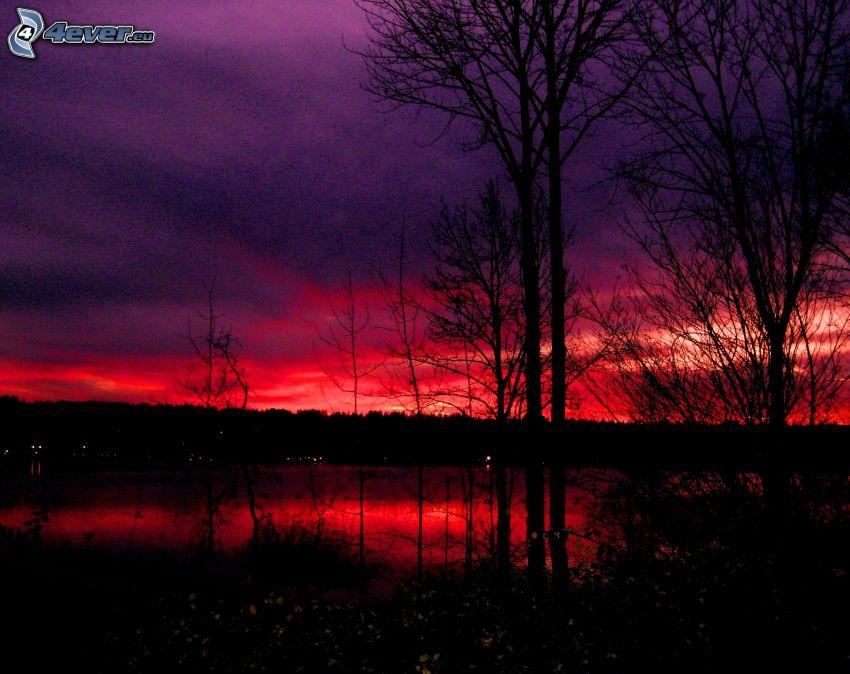 sylwetki drzew, niebo o zmroku, czerwone niebo