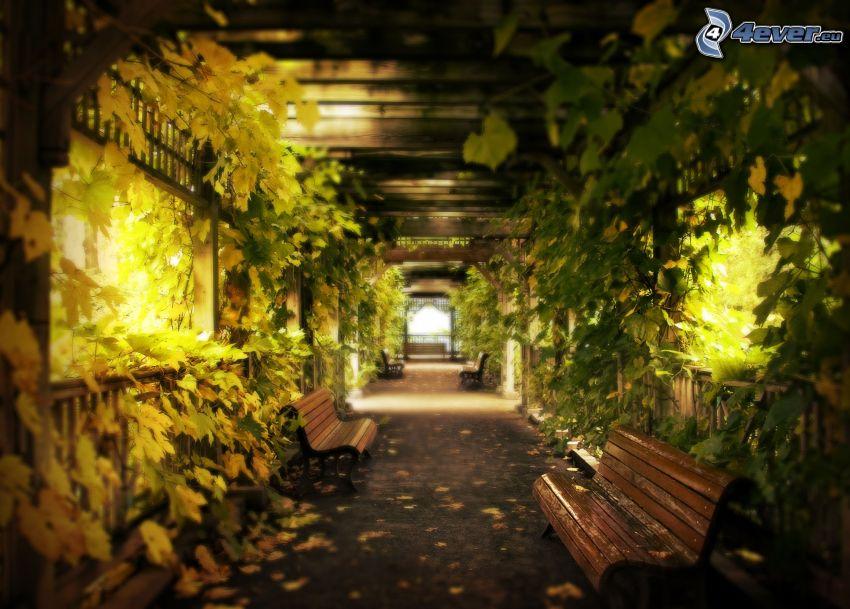 tunel, ławki