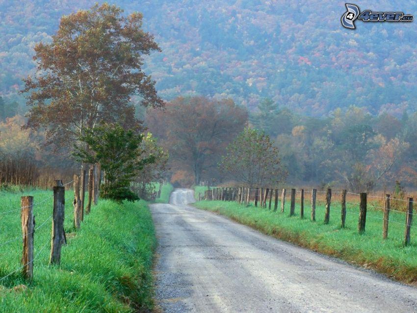 ulica, las, ogrodzenie z drutu