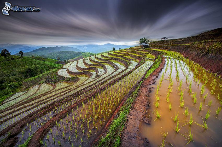 wietnamskie pola ryżowe, ciemne chmury