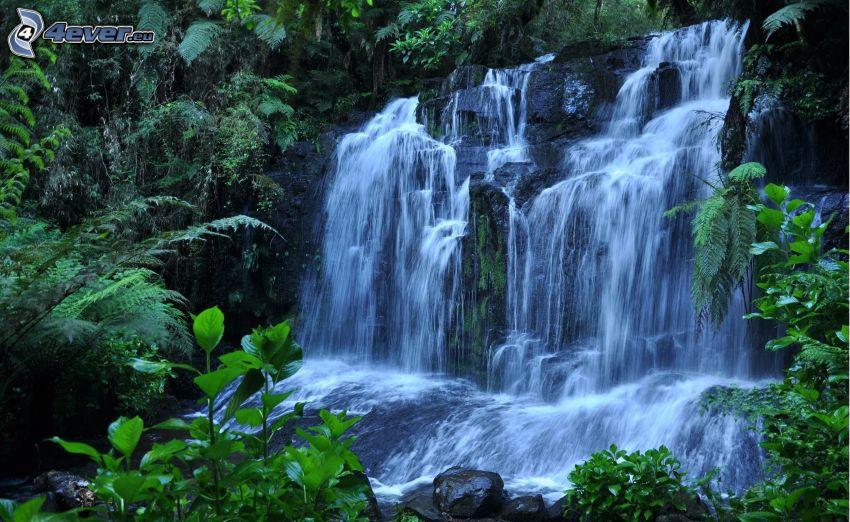 wodospad, paprocie, zieleń