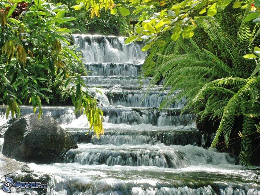 wodospad, paprocie