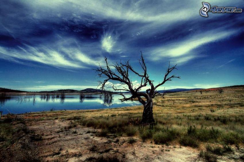 wyschnięte drzewo, samotne drzewo, jezioro, pustynny krajobraz