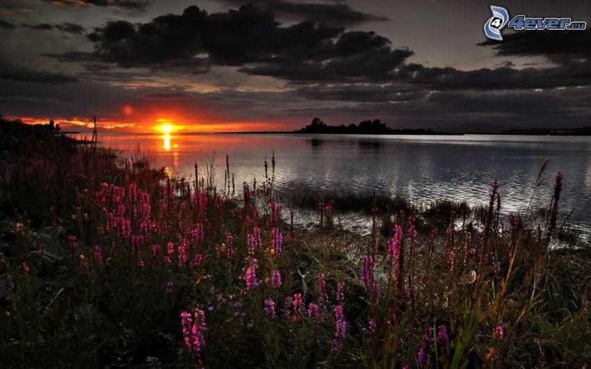 zachód słońca nad morzem, ciemne chmury, fioletowe kwiaty