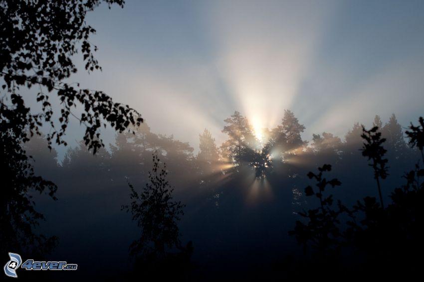 zachód słońca w lesie, promienie słoneczne