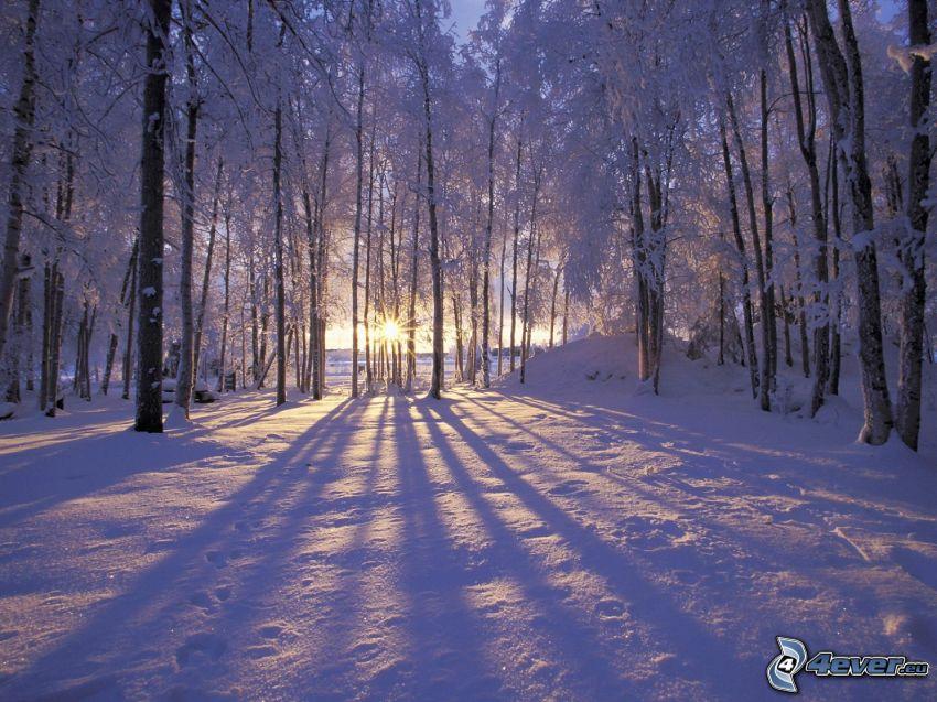 zachód słońca w lesie, zaśnieżony las, cień drzewa