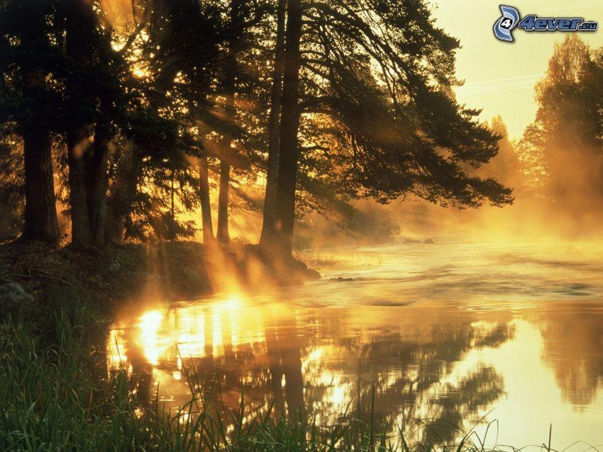 zachód słońca za lesem, promienie słoneczne, rzeka, żółte niebo, sylwetki drzew