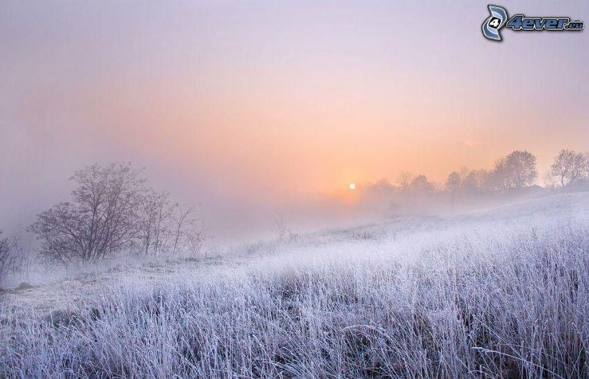 zamarznięta trawa, przyziemna mgła, słabe słońce